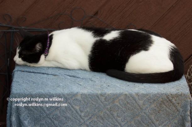 freddie cat