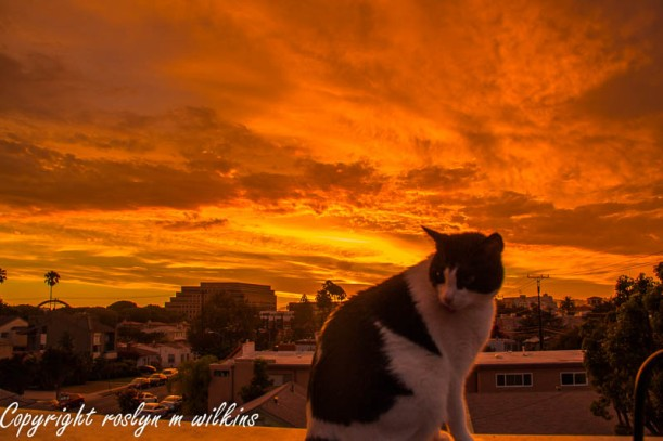 freddie and sunset