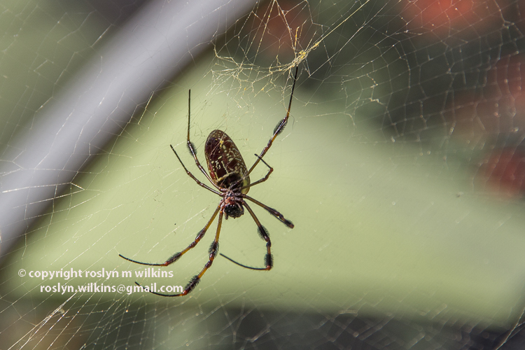 spider-pavilion-093015-034-C-750px