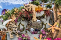 rose-parade-floats-010216-019-C-700px