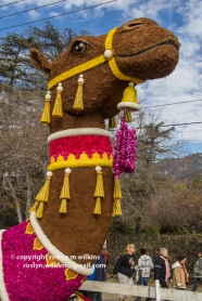 rose-parade-floats-010216-029-C-700px