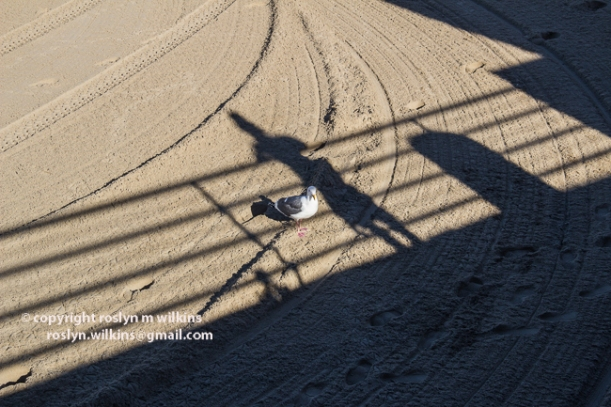 pier-palisades-beach-012116-062-C-650px