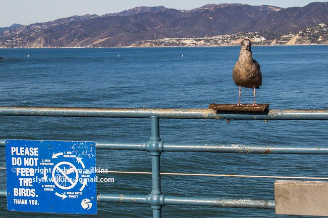 santa monica pier and beach