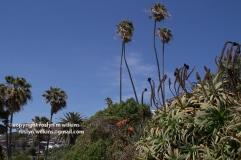 laguna-beach-042016-139-C-600px