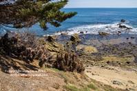 laguna-beach-042016-233-C-600px