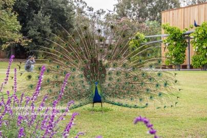 arboretum-051416-023-C-600px