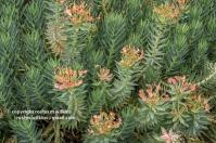 arboretum-051416-134-C-600px