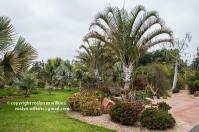 arboretum-051416-138-C-600px
