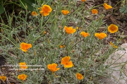 arboretum-051416-161-C-600px
