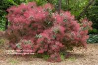 arboretum-051416-162-C-600px
