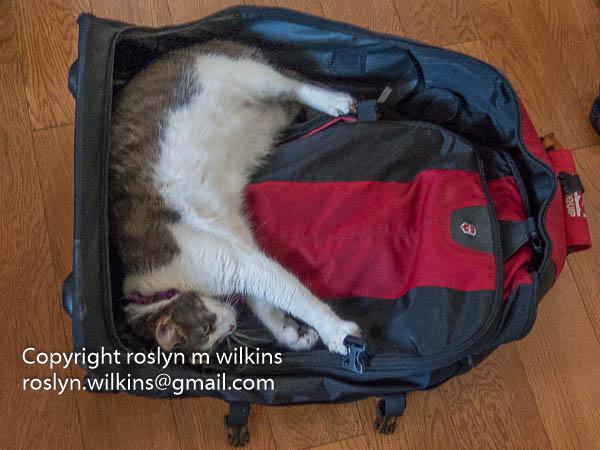 frankie-suitcase-072516-004-C-600px
