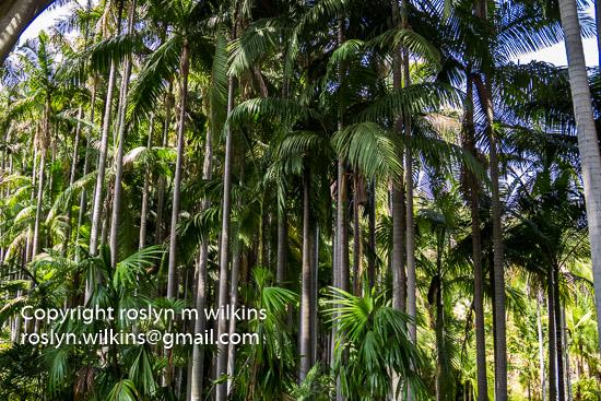 virginia-robinson-073016-079-C-550px