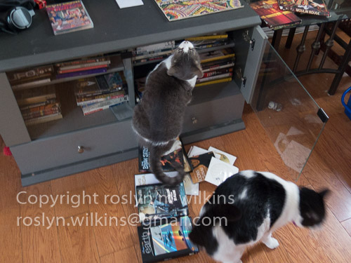 Freddie & Frankie DVDs