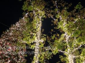 grove-121016-052-c-500px