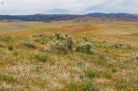 antelope-valley-poppies-041017-052-C-500px