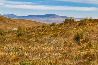 antelope-valley-poppies-041017-062-C-500px