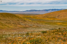 antelope-valley-poppies-041017-064-C-500px