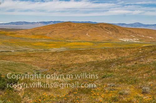 antelope-valley-poppies-041017-068-C-500px