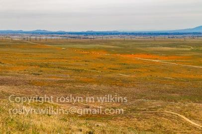 antelope-valley-poppies-041017-073-C-500px