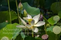 lotus-festival-071517-044-C-500px