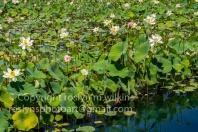 lotus-festival-071517-053-C-500px