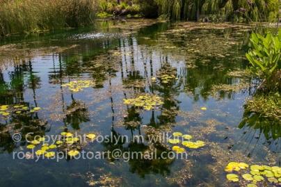 lotus-festival-071517-128-C-500px