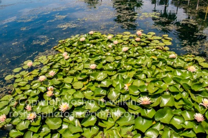 lotus-festival-071517-221-C-500px