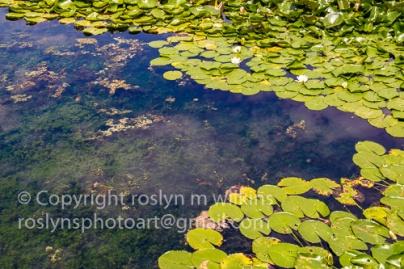 lotus-festival-071517-226-C-500px