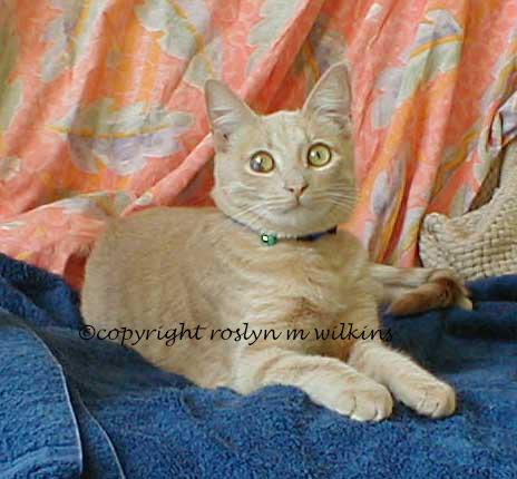 pharoah cat
