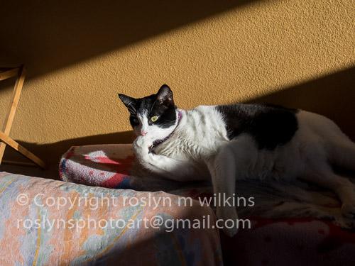 Frankie Freddie sun