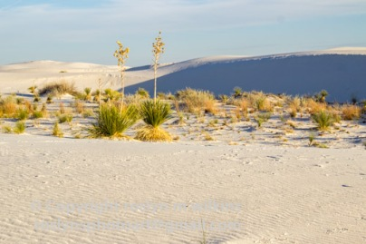 white-sands-101517-098-C-500px-2