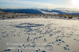 white-sands-101517-121-C-500px