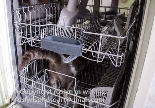 frankie-dishwasher