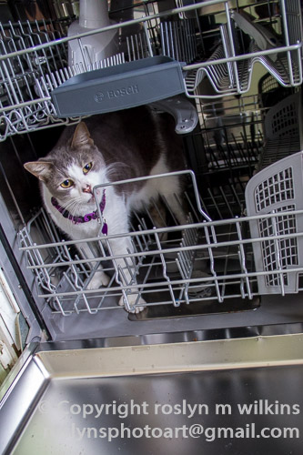 frankie dishwasher