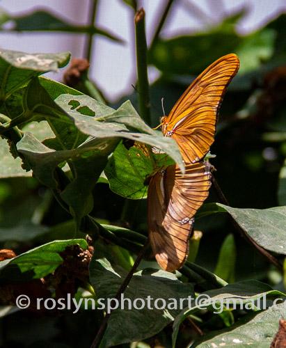 natural history museum butterflies