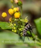 NHM-butterflies-061518-043-C-500px