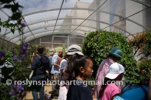 NHM-butterflies-061518-054-C-500px