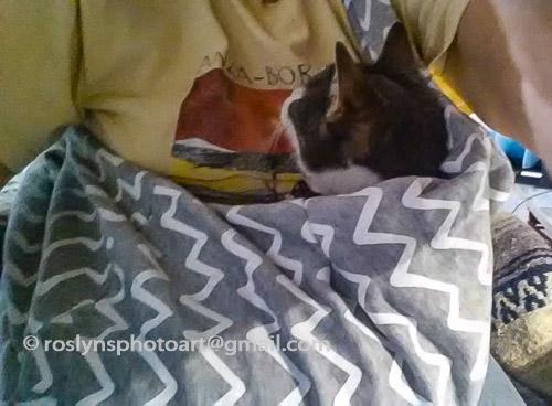 frankie cat sling