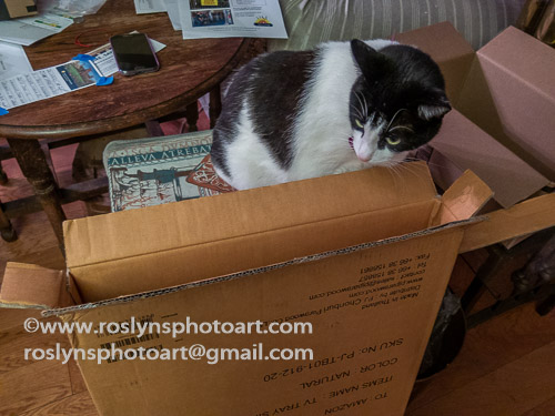 freddie box